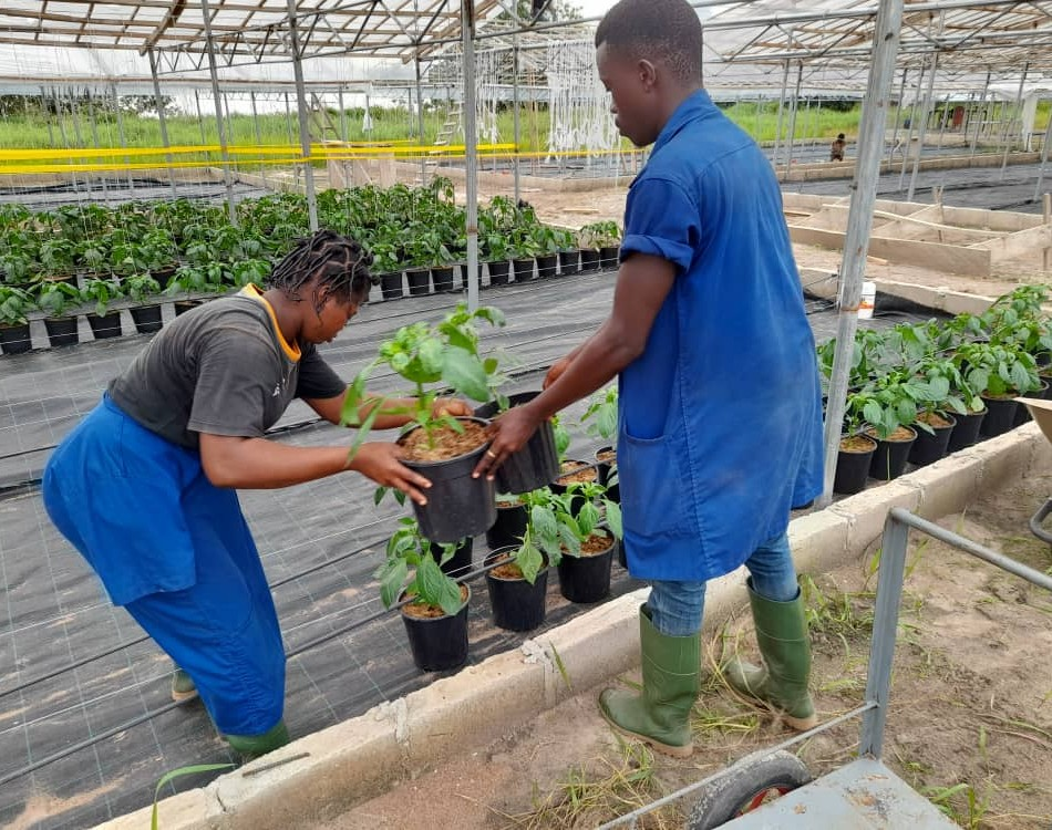 HortIvoire boosts local vegetable produce in Ivory Coast